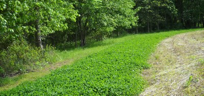 Food Plots for Deer in Tennessee