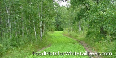 Food Plots in Texas - Food Plots for Deer in Texas