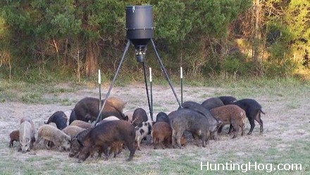 Feral Hog Hunting and Trapping in Texas - Necessary to Control Urban Hog Damage