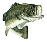 Pond Management for Largemouth Bass