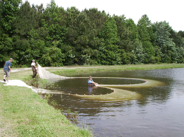 Pond Management Pond Management