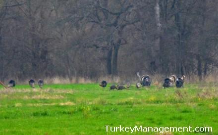 Wild Turkey Disease and Impact of LPDV