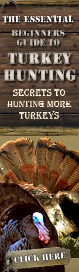 Turkey Hunting and Management