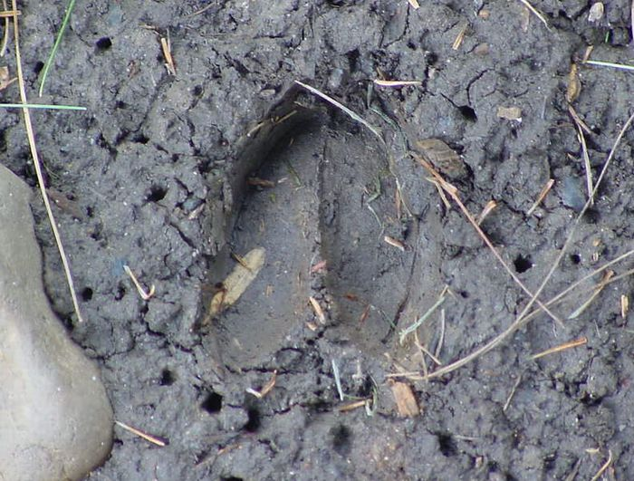 Monster Buck Track