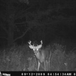 Whitetail Buck Caught on Game Camera