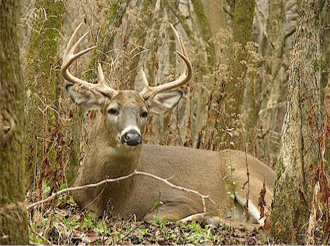 Better Habitat Management for Better Deer!