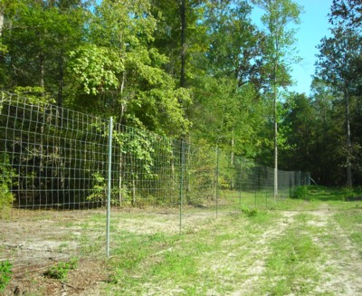 High Fences and Whitetail Deer Hunting