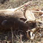 Whitetail Deer Hunting Trip in Texas