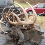 Fighting Bucks Lock Up