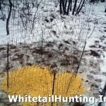 shed-antler-trap-hunting-02