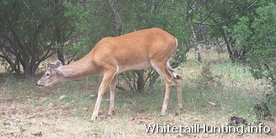 Whitetail Hunting - My Game Camera Review