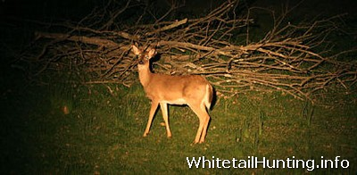 Whitetail Hunting: Surveys for Deer