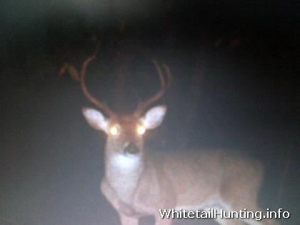 Whitetail Hunting for Deer Herd Improvement