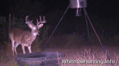 Whitetail Hunting: Deer Hunting Lease in Lampasas County Texas