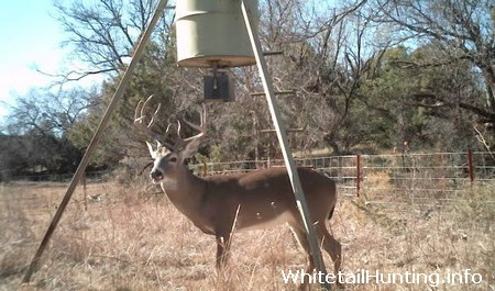 Deer Hunting in Coryell County Texas