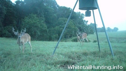 Improve Whitetail Deer Hunting, Antler Growth with Food Plots