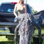 Alligator Hunting in Florida: Big Alligator!