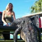 Alligator Hunting Louisiana