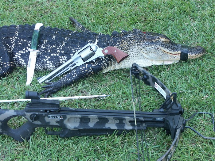Legal equipment for hunting alligators varies from state to state.
