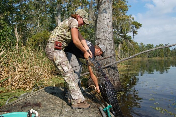 Alligator hunters in Louisiana