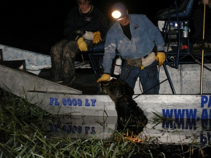 Airboats are great alligator hunting equipment to have!