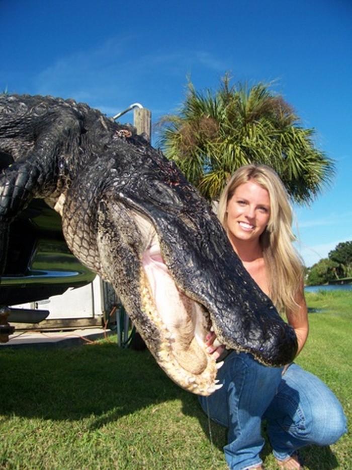 28 Foot Alligator Florida