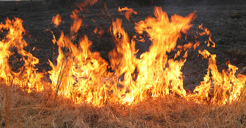 Controlled Burning, Prescribed Burning for Deer and Other Wildlife