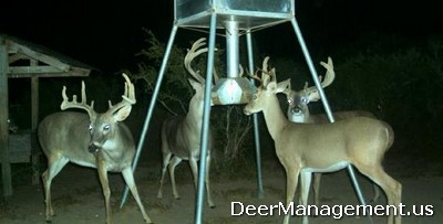 Feeding Protein Pellets to Whitetail Deer for Management