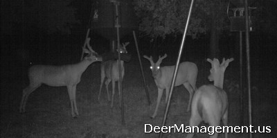 Whitetail Deer Management: More Bucks on Cameras