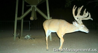 Whitetail Deer Management for Game and Non-Game Wildlife Species