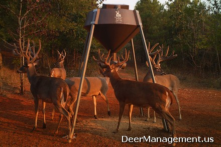 Deer Hunting and Management: Feeding Protein to Grow Bigger Bucks