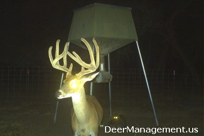 How Much Protein Does a Deer Eat Each A Day - Deer Management
