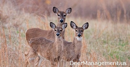 Deer Hunting and Management: Shooting Does with Fawns