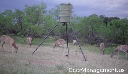 Doe Harvest, Deer Hunting and Whitetail Deer Management