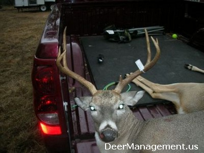 Good Deer Management: Cull Bucks with Missing Brow Tines