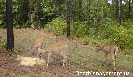 Deer Management: RIce Bran for Supplemental Feeding and Deer Attractant