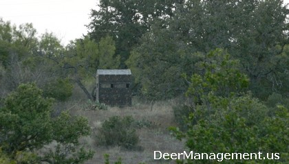 Texas Whitetail Deer Hunting Season