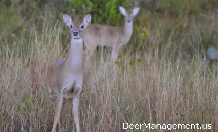 Doe Harvest for Deer Management: Shooting Does with Fawns in Tow
