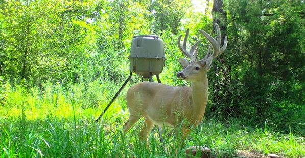 Best Feeder Times for Whitetail Hunting – Whitetail Hunting