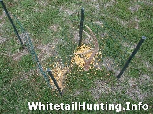 Antler Trap 01 Whitetail Hunting