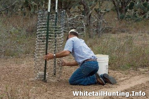 Make A Cottonseed Feeder For Whitetail Deer Whitetail